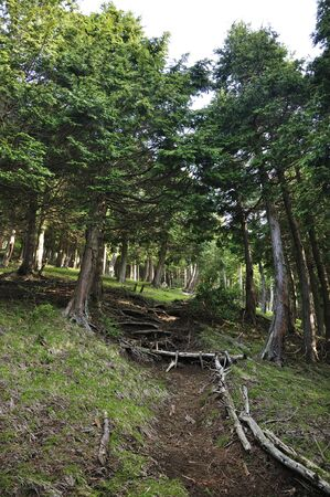 Western tanzawa way shade swamp Shindo