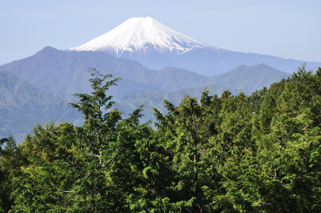 Mt. Fuji from the forest 写真素材