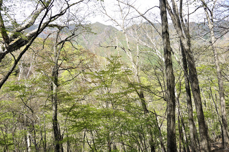 Koganezawa continuous ridge of fresh green.