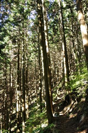 Fall sunshine Woods 版權商用圖片