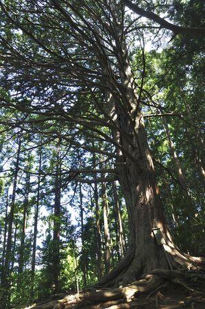 Okutama Shimhimu-no-Mikami