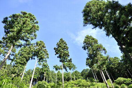 Okutama Takamizuyama Forest 写真素材