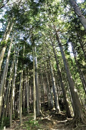 Afforesting Mt. Takamizu