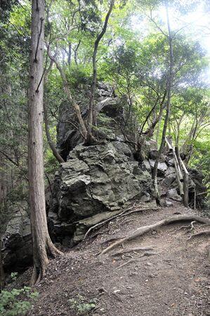Omusashi Iwatake Mushroom Stone 写真素材