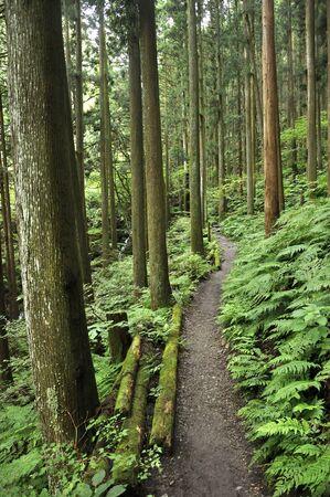 The mountain path of The Barno ori yama 写真素材