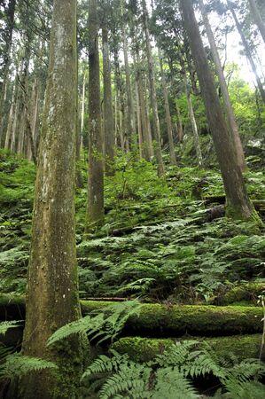 Summer Bar No oriyama Forest 写真素材