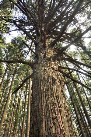 Omotesando Forest of Mt. Takeko