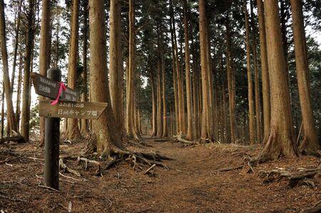 Oyama Akinomine ridge forest