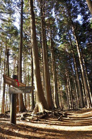 Tanzawa mountain 写真素材