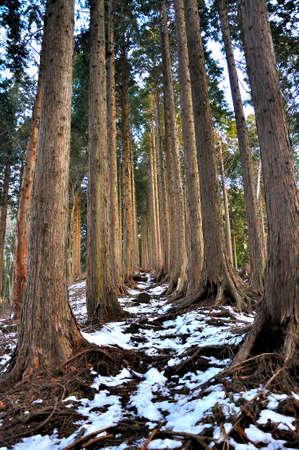 Tanzawa Snowy Path on the Ridge 写真素材