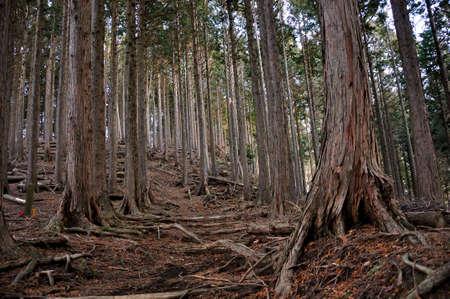 Tanzawa: The Way of the Aoi Ridge