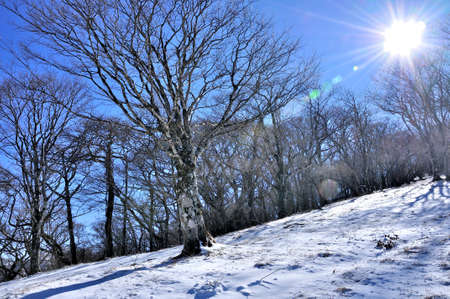 Tanzawa with snow make-up Winter day and bee of Nabeyama Nishito