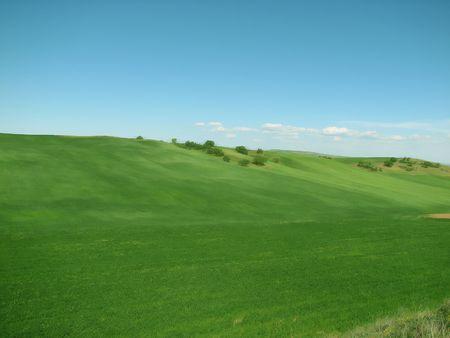 savana: Dream Field Stock Photo