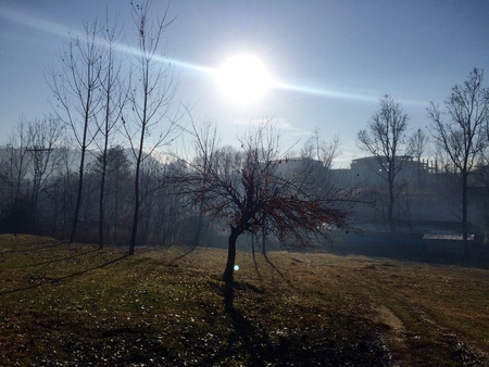 frosty morning: Sunny and Frosty Morning