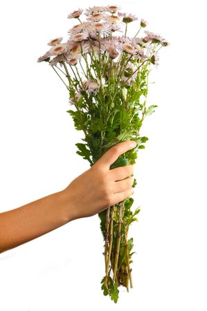 arm bouquet: Arm of girl giving bouquet of pink flowers isolated on white background