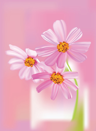 Vector illustration of beautiful cosmos flowers on pink background Vector