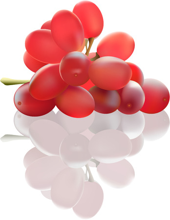 Red grape on the white background. Made with mesh. No transparencies. Illustrator 8 compatible EPS. Stock Vector - 6563591