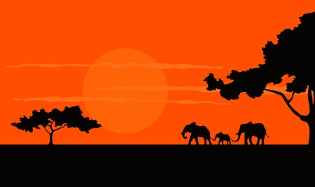 desert sunset: Cartoon illustration of the African Safari sunset