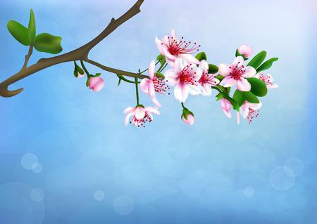Sakura blossoms background, vector illustration Vector