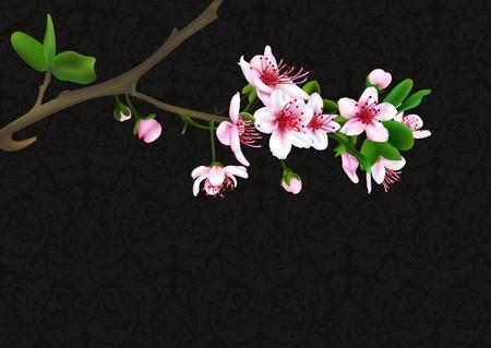 Sakura-Blüten mit retro Hintergrund Vektor-illustration Vektorgrafik