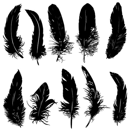 canary bird: Feathers silhouette collection. Isolated.