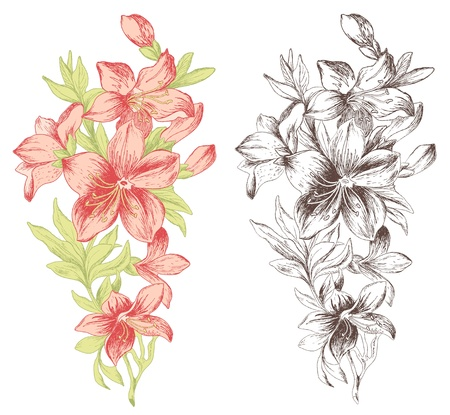 hand drawn flower: Floral ornament in baroque style. Hand drawn roses.
