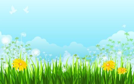 Summer background. Grass, flowers, sky.  Illustration