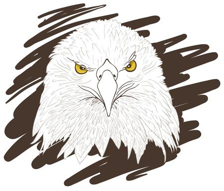 kel: Illusteation of a Eagle head.  Çizim