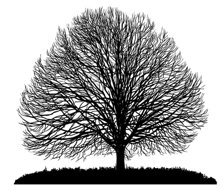 black and white leaf: silhouette of a tree. Isolated on white Illustration