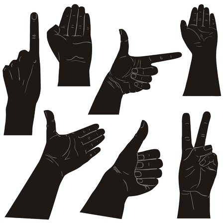Collection of hands on diferent positions, illustration Vector