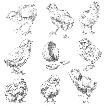 holiday celebrations: Easter chick set. Hand drawn monochrome illustration isolated in white.