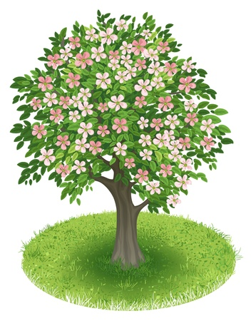 cherry branch: Spring Tree with blossoms in green field, illustration