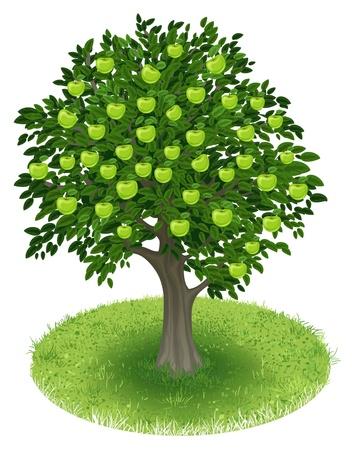 arbol de pino: Summer Manzano con frutas de manzana verde en campo verde, ilustración