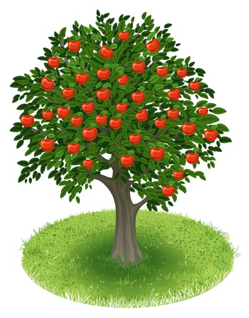 Summer Apple Tree with red apple fruits in green field, illustration