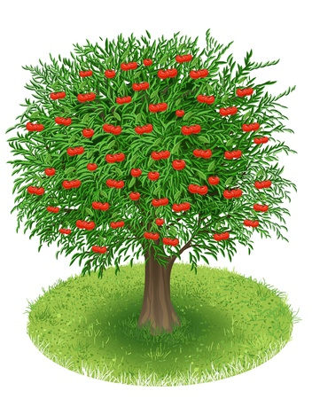 Cherry Tree with fruits in green field, illustration Vector
