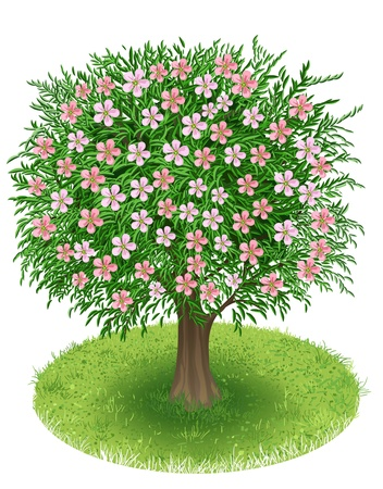 Spring Tree with blossoms in green field, illustration Vector