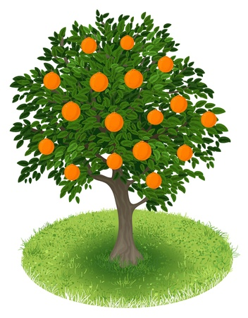 Summer Orange Tree avec des fruits orange dans le champ vert, illustration