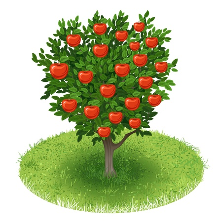 red apple: Summer Apple Tree with red apple fruits in green field, illustration
