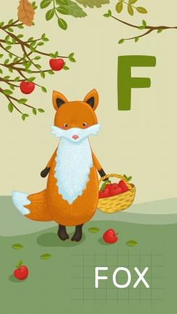 Animals ABC, letter F. Fox in alphabet card.  Vector