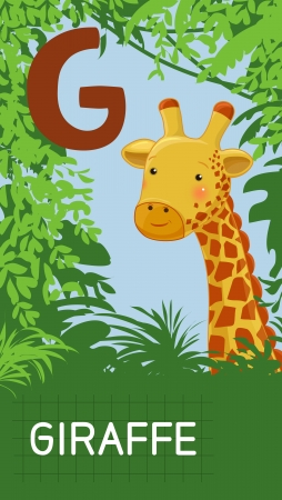 g giraffe: Animals ABC, letter G. Giraffe in alphabet card.