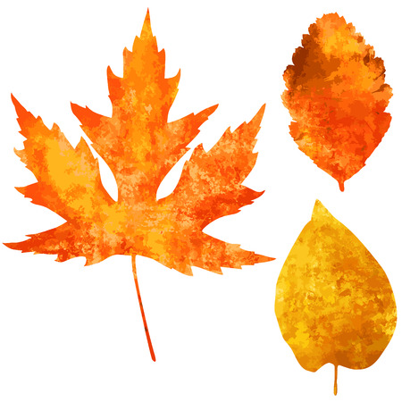 Collection of beautiful watercolor autumn leaves isolated on white background