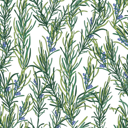 rosemary: Rosemary pattern, seamless texture for textiles, packaging, paper and your design