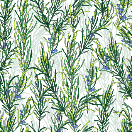 Rosemary pattern, seamless texture for textiles, packaging, paper and your design Vector