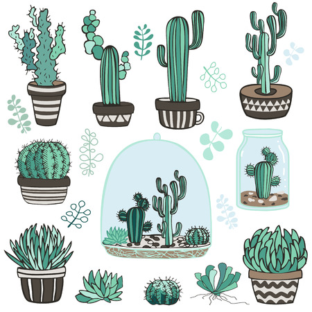 terrarium: Collection of succulente plants and terrarium. Vector. Nature clip-art Illustration
