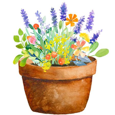 Aquarell florale Komposition. Topf mit Blumen. Schnelle Isolation. Hallo-res-Datei. Handgemalt. Raster-Darstellung. Standard-Bild - 52526808