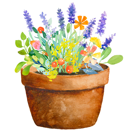 Watercolor floral composition. Pot with flowers. Fast isolation. Hi-res file. Hand painted. Raster illustration.