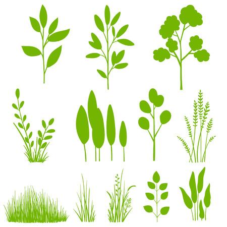 untamed: Set of plants, leaves, trees. Botanical clip art, graphic design elements