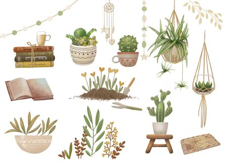 Succulents, cactus, plants lifstyle raster clip art. Clipping path included for quick isolation.