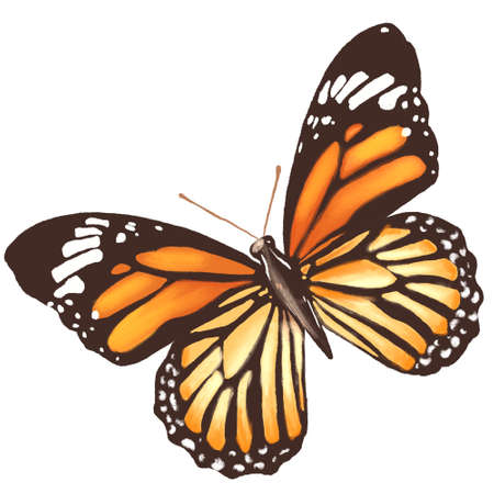 Butterfly icon, clipping path included, illustration Banque d'images