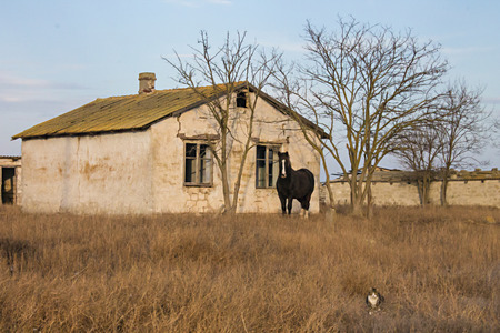 abandoned house: The horse on the background of an abandoned house in a field
